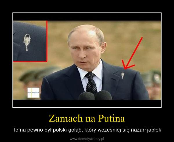 Zamach na Putina – To na pewno był polski gołąb, który wcześniej się nażarł jabłek