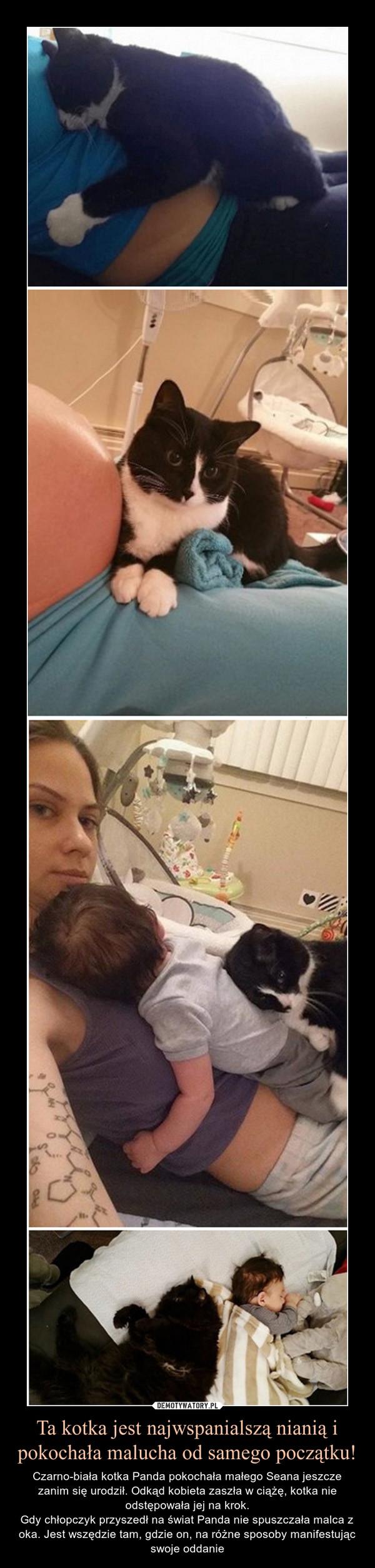 Ta kotka jest najwspanialszą nianią i pokochała malucha od samego początku! – Czarno-biała kotka Panda pokochała małego Seana jeszcze zanim się urodził. Odkąd kobieta zaszła w ciążę, kotka nie odstępowała jej na krok.Gdy chłopczyk przyszedł na świat Panda nie spuszczała malca z oka. Jest wszędzie tam, gdzie on, na różne sposoby manifestując swoje oddanie