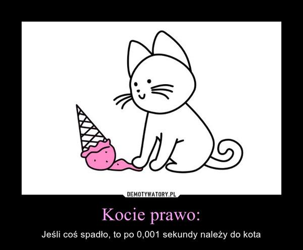 Kocie prawo: – Jeśli coś spadło, to po 0,001 sekundy należy do kota