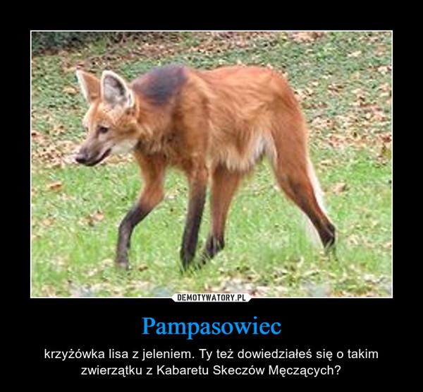 Pampasowiec – krzyżówka lisa z jeleniem. Ty też dowiedziałeś się o takim zwierzątku z Kabaretu Skeczów Męczących?