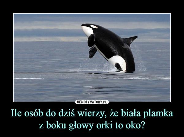 Ile osób do dziś wierzy, że biała plamka z boku głowy orki to oko? –