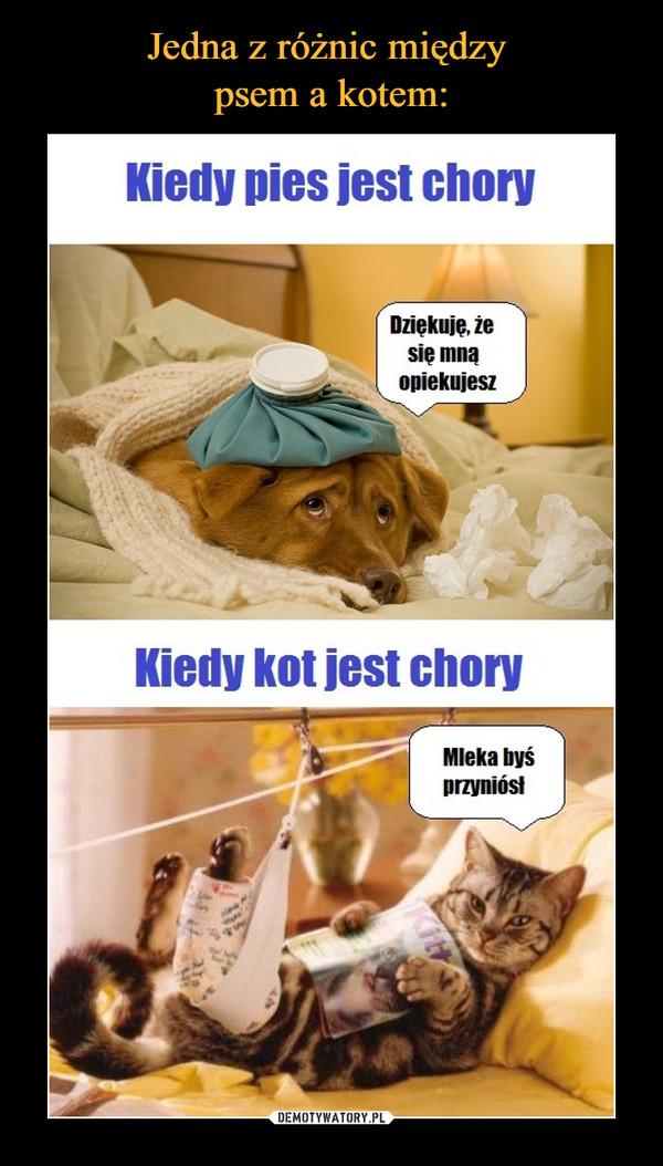 –  Kiedy pies jest choryDziękuję, że się mną opiekujeszKiedy kot jest choryMleka byś przyniósł