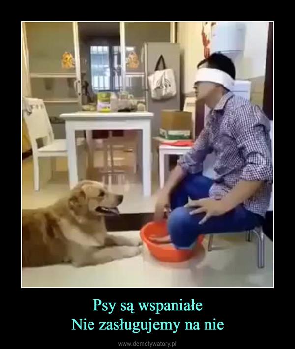 Psy są wspaniałeNie zasługujemy na nie –