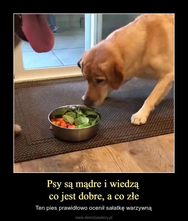 Psy są mądre i wiedzą co jest dobre, a co złe – Ten pies prawidłowo ocenił sałatkę warzywną