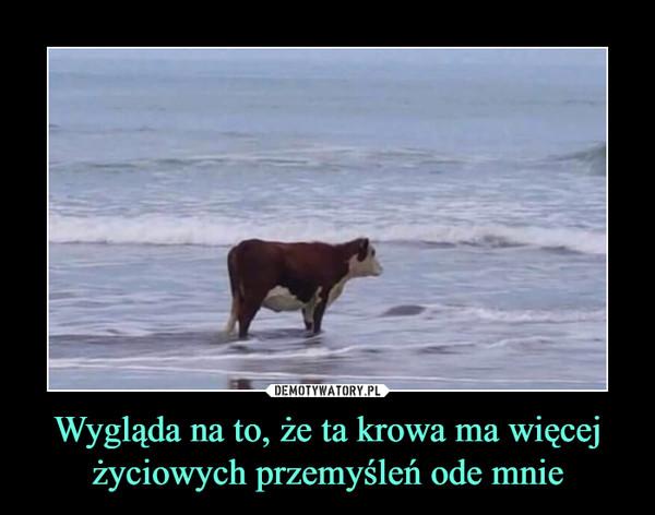 Wygląda na to, że ta krowa ma więcej życiowych przemyśleń ode mnie –
