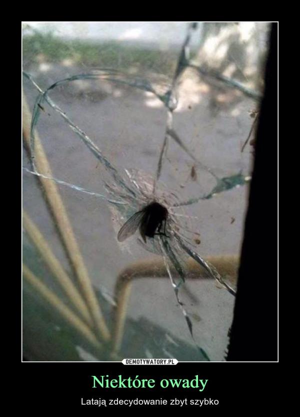 Niektóre owady – Latają zdecydowanie zbyt szybko