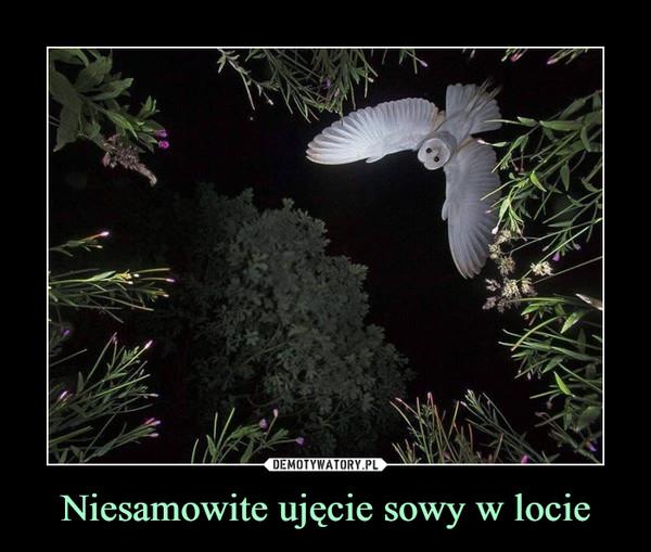 Niesamowite ujęcie sowy w locie –