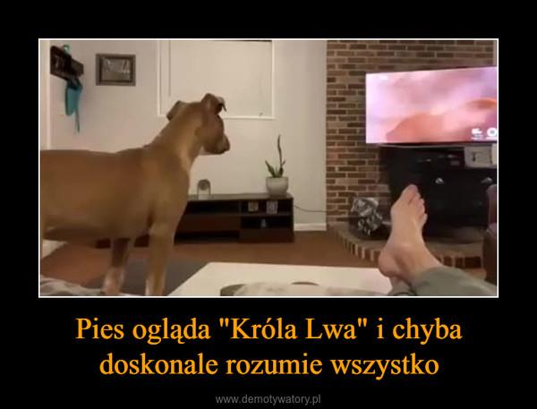 """Pies ogląda """"Króla Lwa"""" i chyba doskonale rozumie wszystko –"""