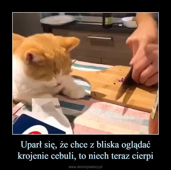 Uparł się, że chce z bliska oglądać krojenie cebuli, to niech teraz cierpi –