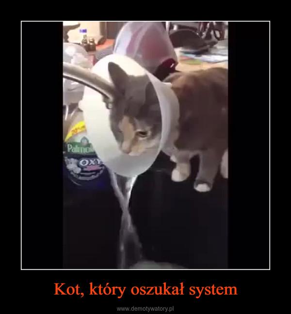 Kot, który oszukał system –