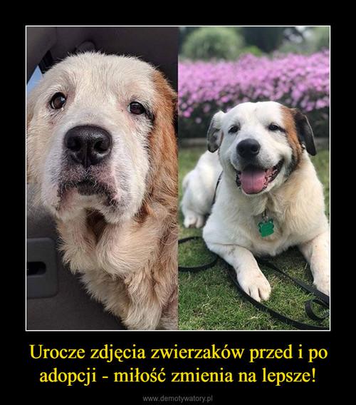Urocze zdjęcia zwierzaków przed i po adopcji - miłość zmienia na lepsze!