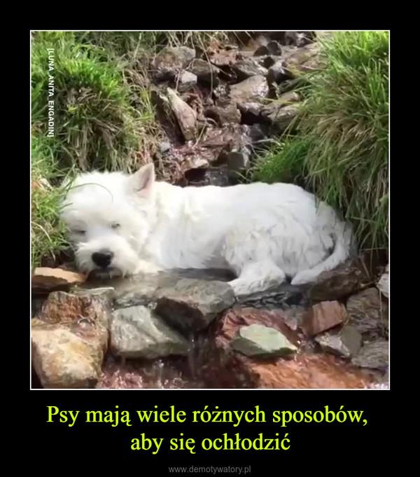 Psy mają wiele różnych sposobów, aby się ochłodzić –
