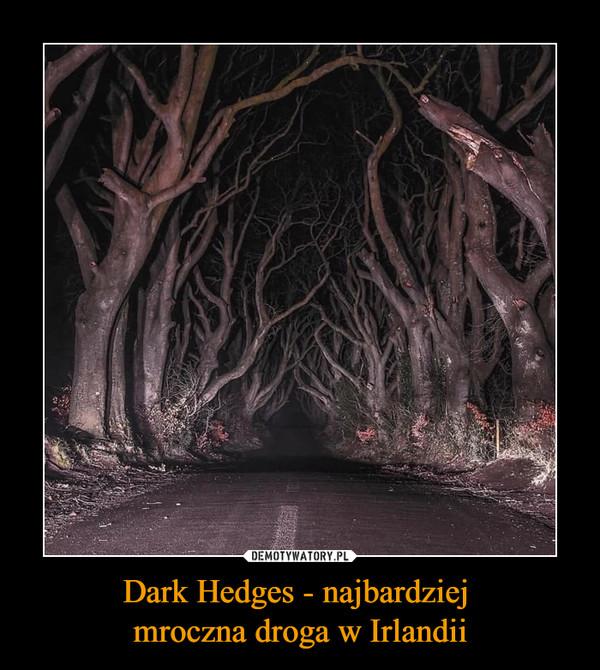 Dark Hedges - najbardziej mroczna droga w Irlandii –