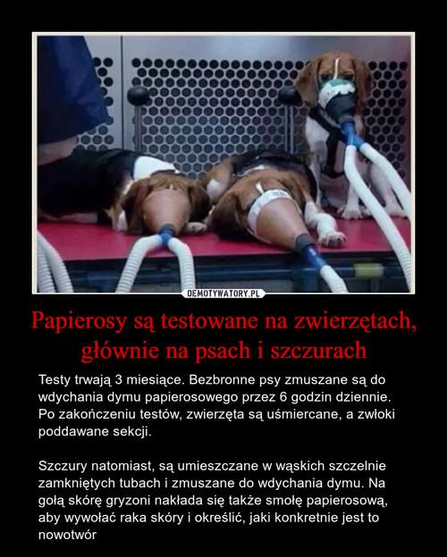 Papierosy są testowane na zwierzętach, głównie na psach i szczurach