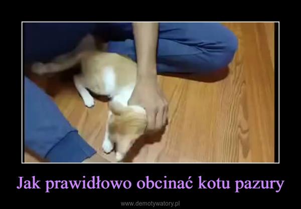 Jak prawidłowo obcinać kotu pazury –