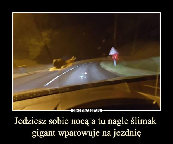 Jedziesz sobie nocą a tu nagle ślimak gigant wparowuje na jezdnię –