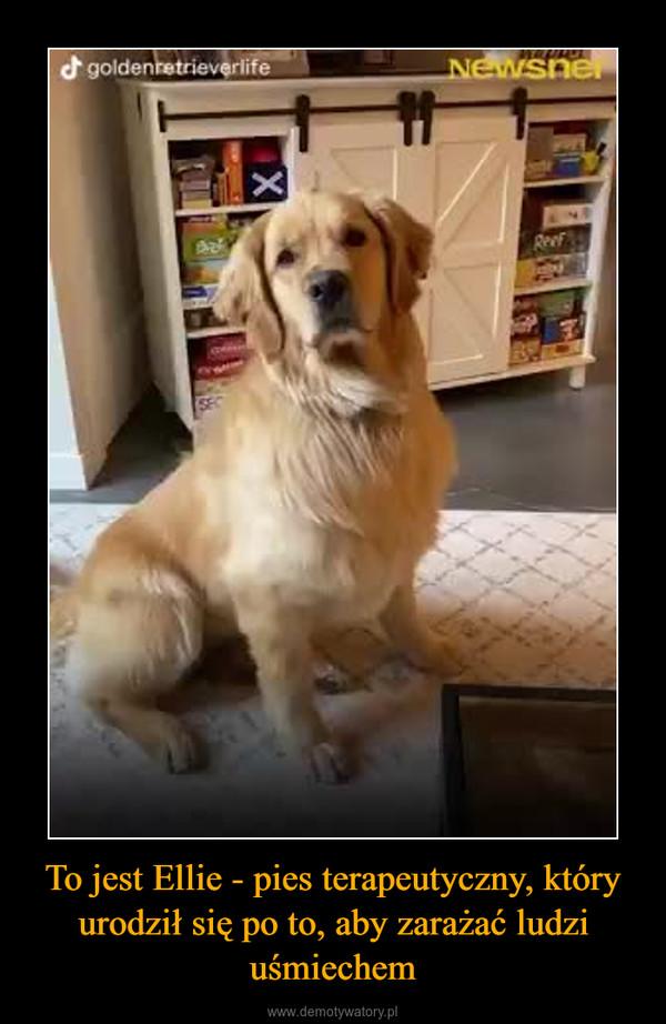 To jest Ellie - pies terapeutyczny, który urodził się po to, aby zarażać ludzi uśmiechem –