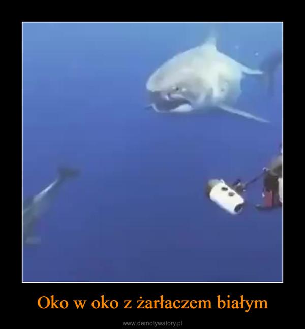 Oko w oko z żarłaczem białym –