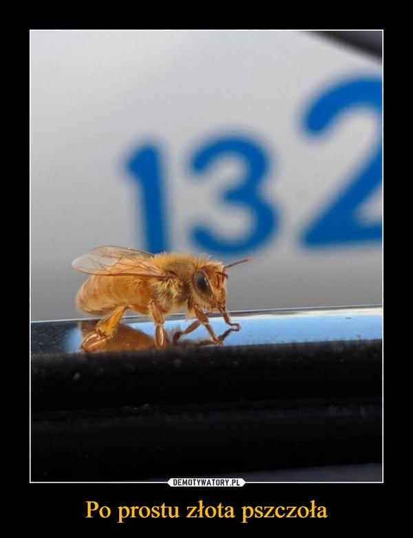 Po prostu złota pszczoła –