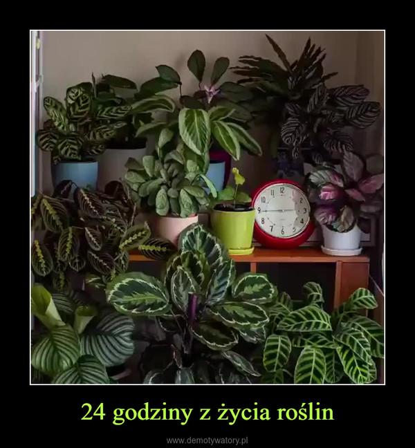24 godziny z życia roślin –
