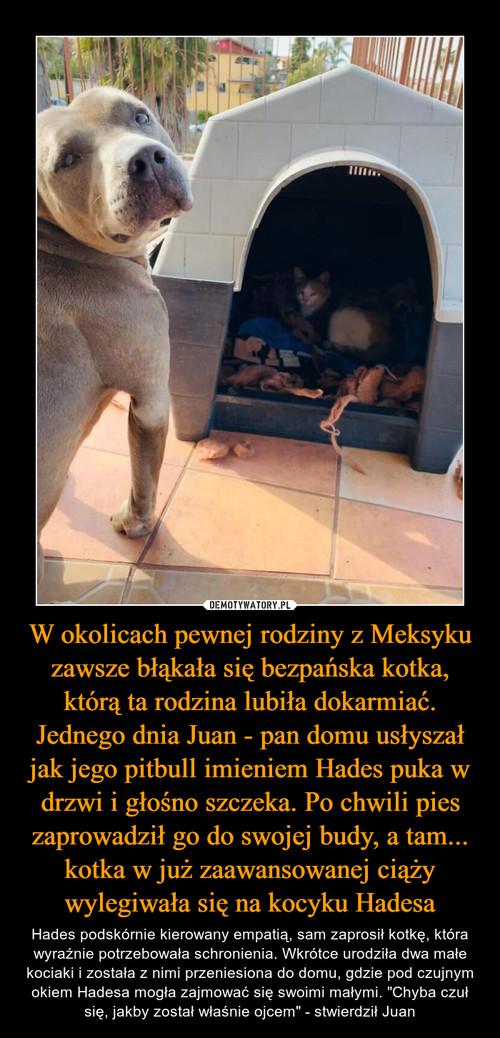W okolicach pewnej rodziny z Meksyku zawsze błąkała się bezpańska kotka, którą ta rodzina lubiła dokarmiać. Jednego dnia Juan - pan domu usłyszał jak jego pitbull imieniem Hades puka w drzwi i głośno szczeka. Po chwili pies zaprowadził go do swojej budy, a tam... kotka w już zaawansowanej ciąży wylegiwała się na kocyku Hadesa