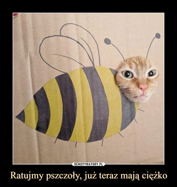 Ratujmy pszczoły, już teraz mają ciężko –