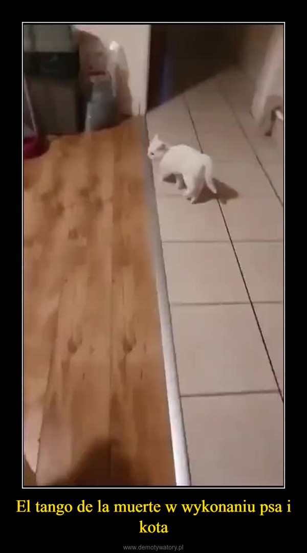 El tango de la muerte w wykonaniu psa i kota –