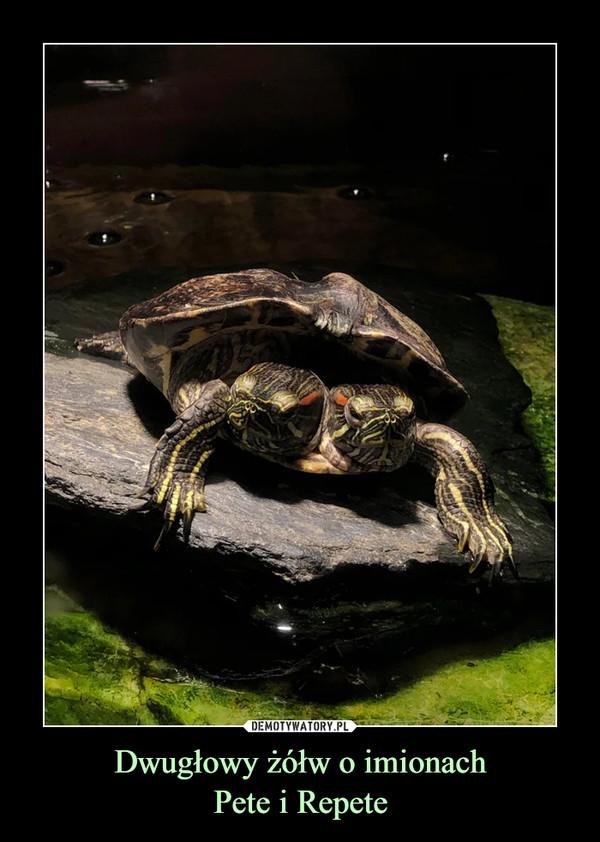 Dwugłowy żółw o imionachPete i Repete –