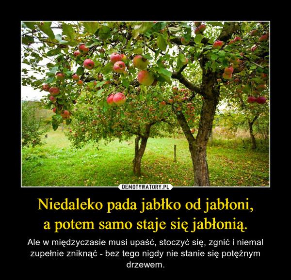 Niedaleko pada jabłko od jabłoni,a potem samo staje się jabłonią. – Ale w międzyczasie musi upaść, stoczyć się, zgnić i niemal zupełnie zniknąć - bez tego nigdy nie stanie się potężnym drzewem.