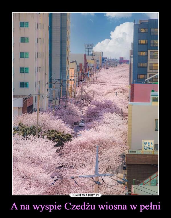 A na wyspie Czedżu wiosna w pełni –