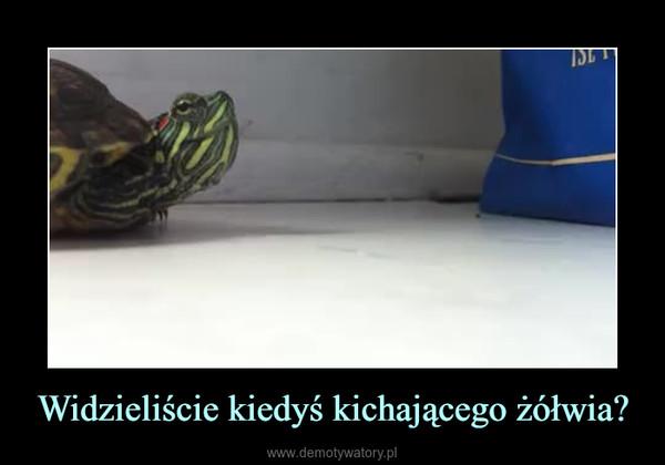 Widzieliście kiedyś kichającego żółwia? –