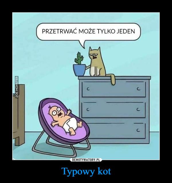 Typowy kot –