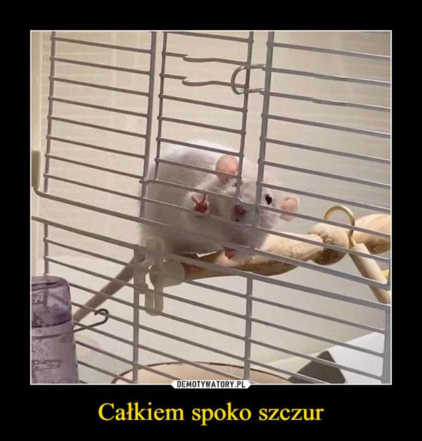 Całkiem spoko szczur –