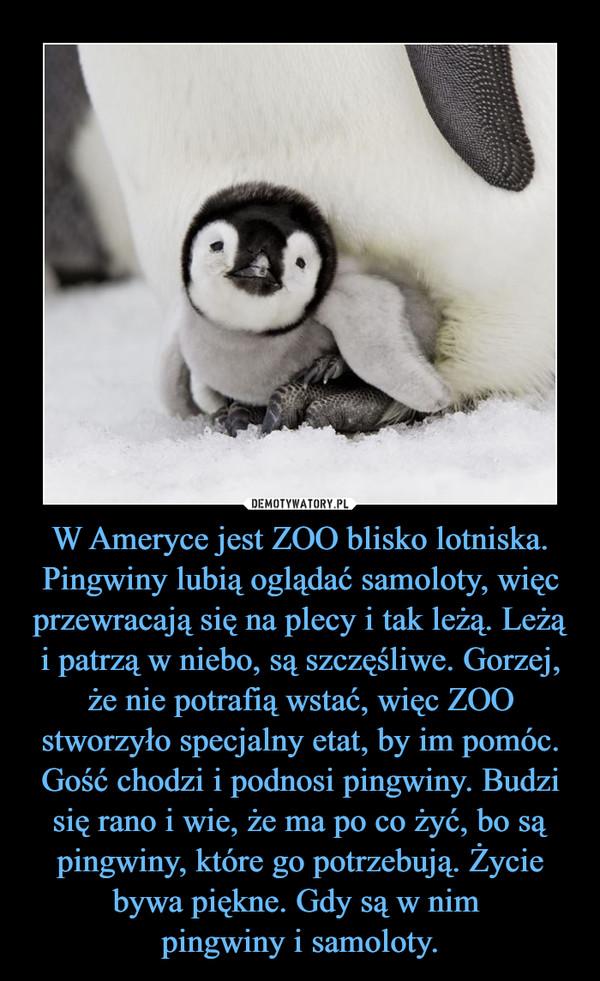W Ameryce jest ZOO blisko lotniska. Pingwiny lubią oglądać samoloty, więc przewracają się na plecy i tak leżą. Leżą i patrzą w niebo, są szczęśliwe. Gorzej, że nie potrafią wstać, więc ZOO stworzyło specjalny etat, by im pomóc. Gość chodzi i podnosi pingwiny. Budzi się rano i wie, że ma po co żyć, bo są pingwiny, które go potrzebują. Życie bywa piękne. Gdy są w nim pingwiny i samoloty. –