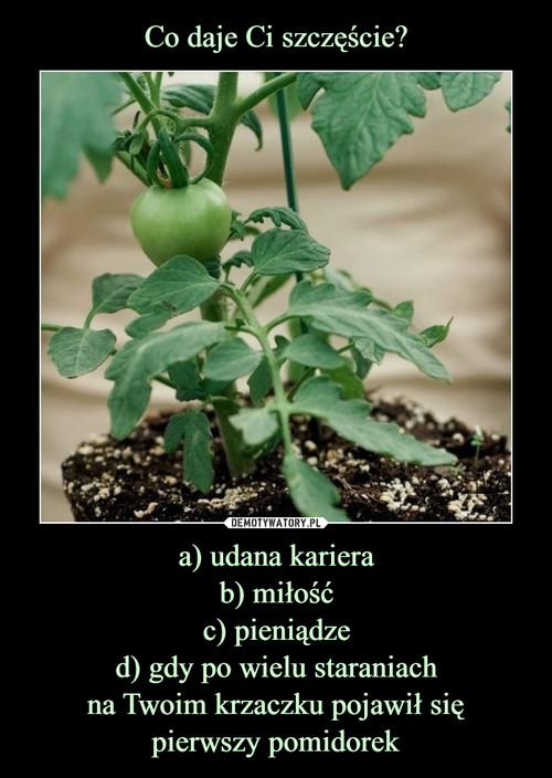 Co daje Ci szczęście? a) udana kariera b) miłość c) pieniądze d) gdy po wielu staraniach na Twoim krzaczku pojawił się pierwszy pomidorek