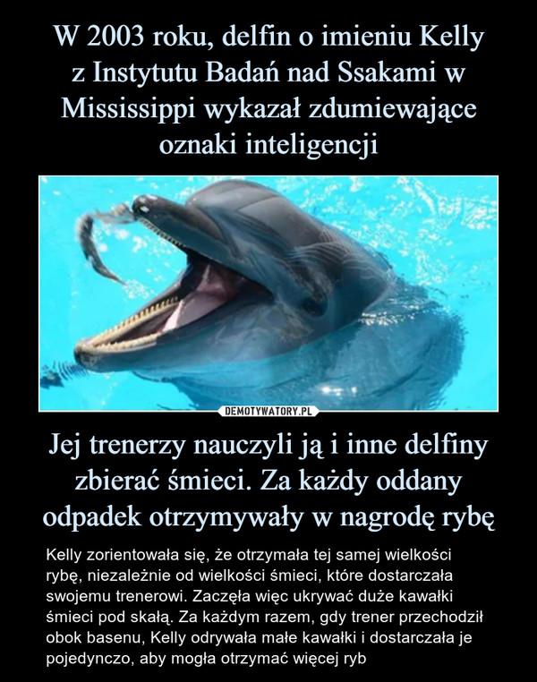 Jej trenerzy nauczyli ją i inne delfiny zbierać śmieci. Za każdy oddany odpadek otrzymywały w nagrodę rybę – Kelly zorientowała się, że otrzymała tej samej wielkości rybę, niezależnie od wielkości śmieci, które dostarczała swojemu trenerowi. Zaczęła więc ukrywać duże kawałki śmieci pod skałą. Za każdym razem, gdy trener przechodził obok basenu, Kelly odrywała małe kawałki i dostarczała je pojedynczo, aby mogła otrzymać więcej ryb