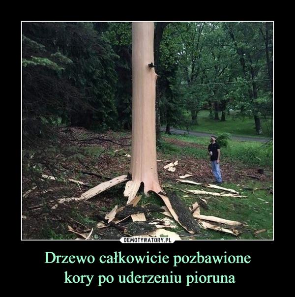 Drzewo całkowicie pozbawione kory po uderzeniu pioruna –